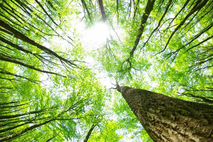 La saggia lentezza della Natura