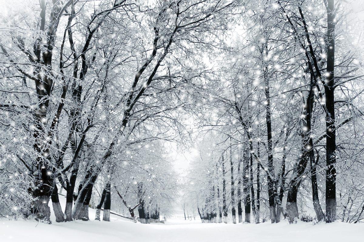 Amai l'inverno